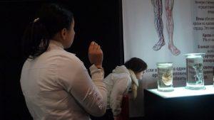 Human body exhibition