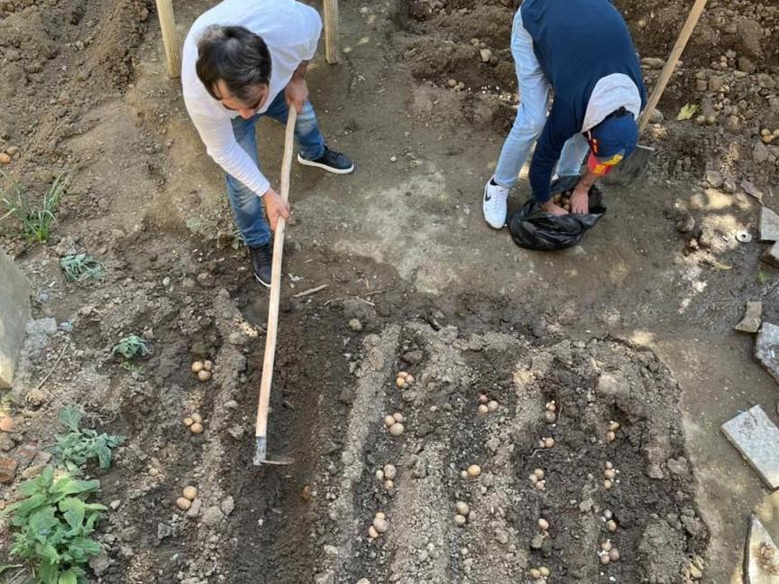 Planting potatoes at Mkurnali